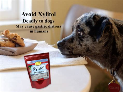 xylitol dogs avoid xylitol sweetener deadly to dogs s healthy kitchen