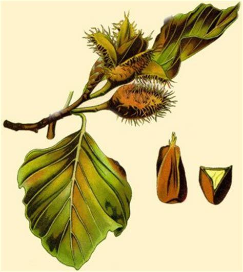 Rote Blätter Baum 4770 by Buche