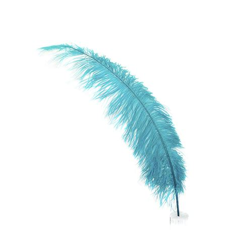 feather with the meaning and symbolism of the word feather