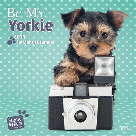 yorkie 2018 calendar books be my yorkie calendars 2018 on abposters