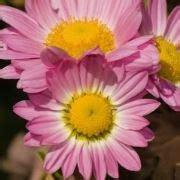 simboli e significati dei fiori significato dei fiori