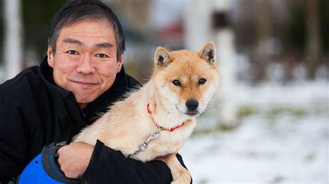 the dogs the hokkaido niseko