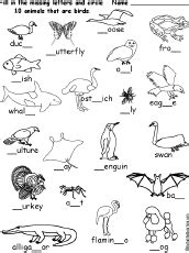 drawing worksheets birds enchantedlearning