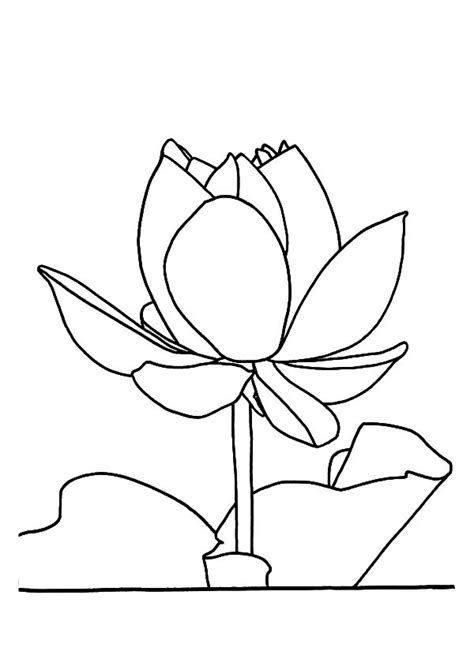 lotus flower outline coloring pages with lotus flower