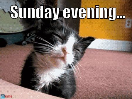 Sunday Meme - sunday evening cat meme cat planet cat planet
