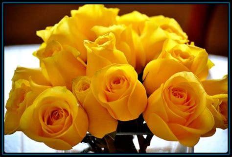 bellas flores amarillas y rojas mandarsaludoscom imagenes rosas amarillas imagen de rosas rojas