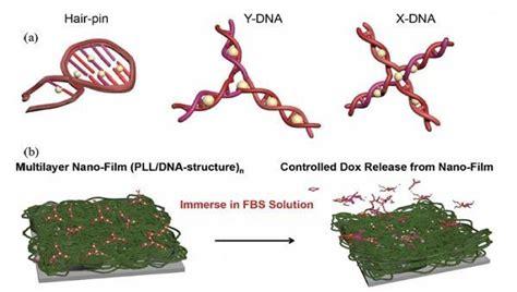 Biology Plus Mba by 항암제 방출 제어 가능한 Dna 나노필름 개발 뇌과학 미디어 대한민국 두뇌포털 브레인월드