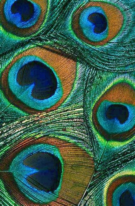 color peacock 1000 ideas about peacock color scheme on