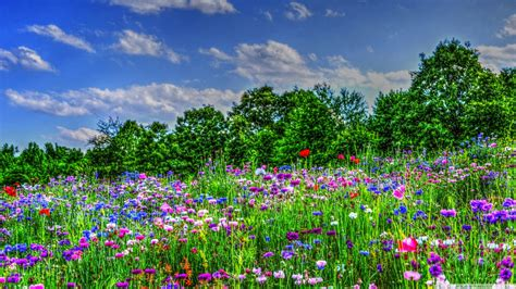wildflower background wildflower field wallpaper and background image 1366x768