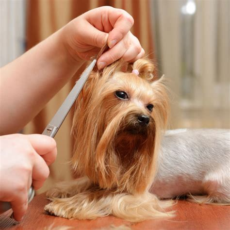 what causes spots on dogs what causes spots on dogs