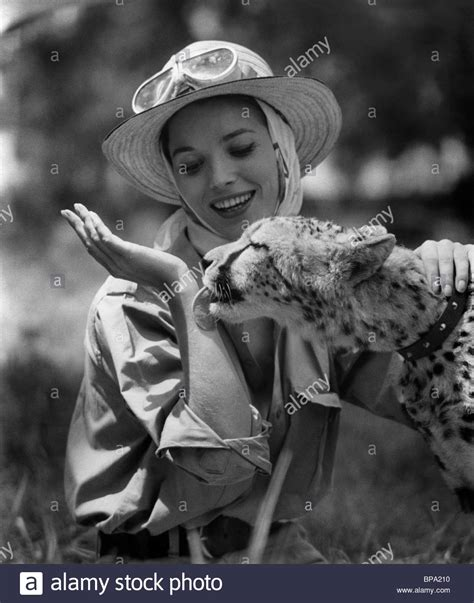 elsa martinelli hatari elsa martinelli cheetah hatari 1962 stock photo