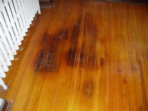 dogs on hardwood floors do pets ruin your hardwood floors mn pets and wood floors