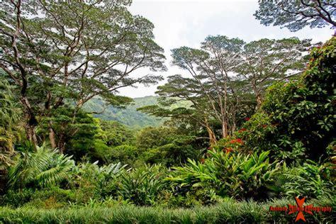 lyon arboretum botanical garden oahu secret garden