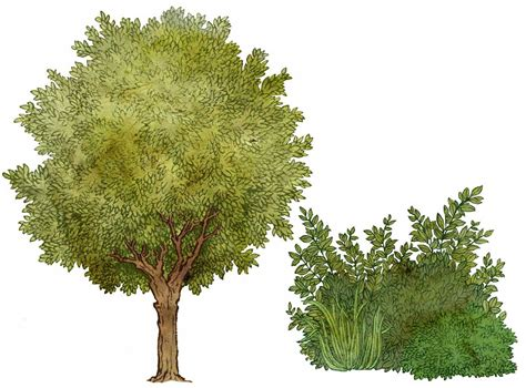 things you should know trees or bushes small things