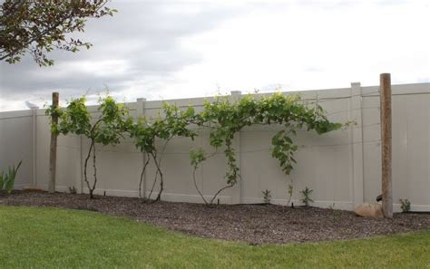 hettinger us decorative grapevine trellis garden