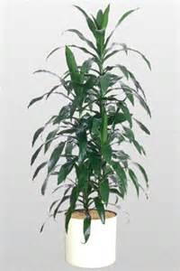 Palm Tree Vase A Plant Affair Llc Los Angeles Leading Interior Plant