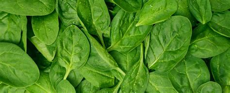 gren keaf produce types here s why leafy green vegetables are key for digestion