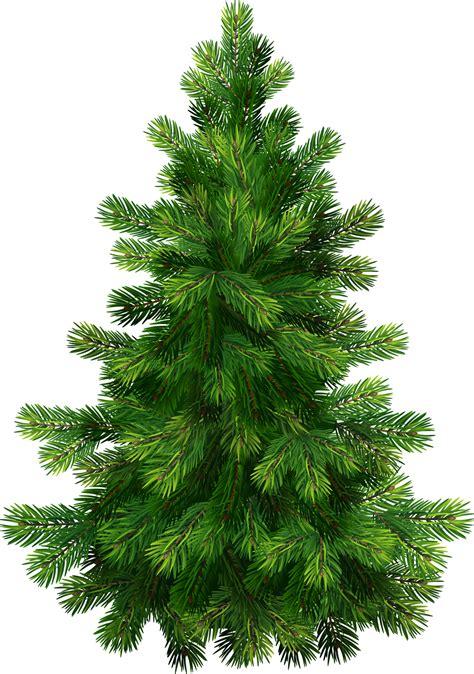 tree pics free free pine tree clip pictures clipartix