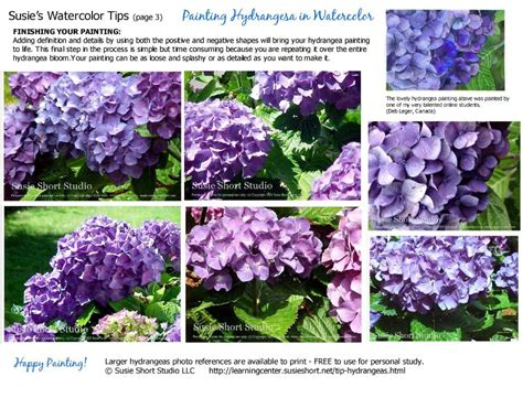 watercolor hydrangea tutorial painting hydrangess in watercolor tips tutorials by