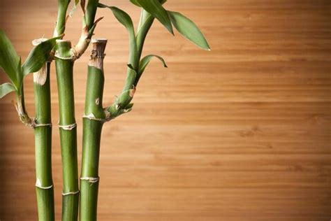 what does wood symbolize a simple guide to feng shui indoor plants feng shui nexus