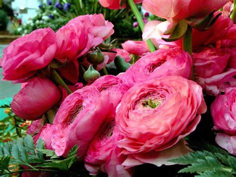 i fiori di sanremo sanremo in fiore sanremo im 8 marzo fuoriporta