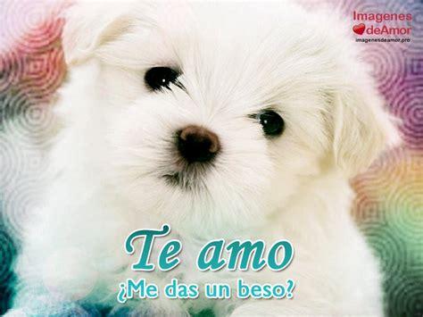 imagenes tiernas de perritos 15 im 225 genes de perritos con frases de amor s 250 per tiernas