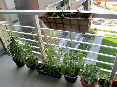Diy How To Plant A Personal Garden In A Small Urban Space How To Start A Balcony Vegetable Garden