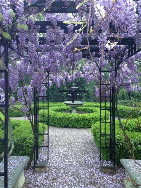 25 best ideas about wisteria arbor on pinterest arbors