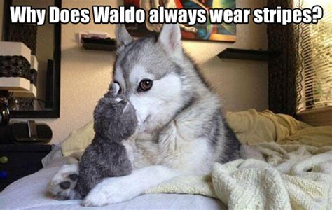 Pun Dog Meme - 17 pun dog puns that will instantly brighten your day