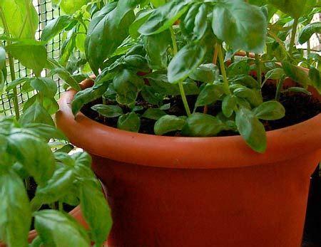 vasi per semina vasi per la semina fooda notizie