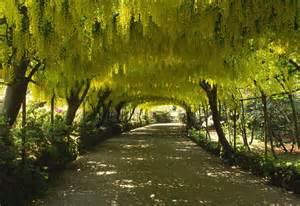 Garden Wales 15 Breathtaking Tree Tunnels Canopies Garden Club