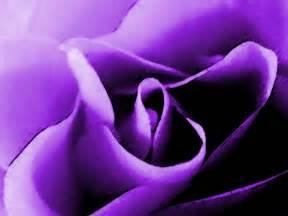 color purple images pictures the color purple