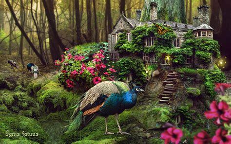 imagenes abstractas reales pavos reales bosque casa flores fondos de pantalla pavos