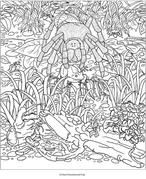 coloring pages for adults amazon welcome to dover publications
