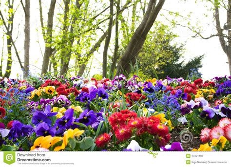 colorful flowers and trees royalty free stock photography image 14121197
