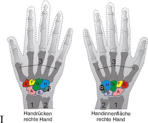 Handgelenk Bilder by Handwurzelknochen