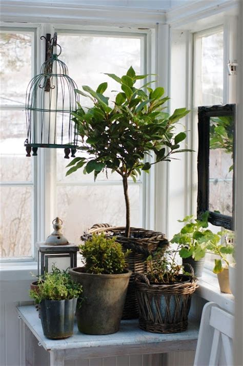 indoor plant display pretty indoor plant display for the home pinterest