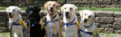 learn how to service dogs june 20 service dogs learn how to work on rta greater cleveland regional transit