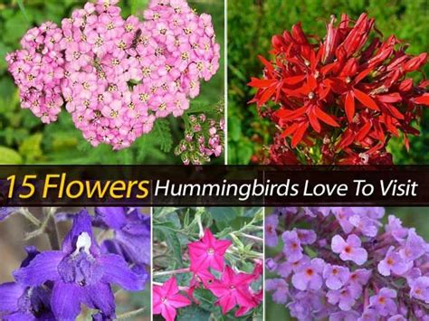 Hummingbirds Are Wonderful Additions To The Garden If You Hummingbird Garden Flowers