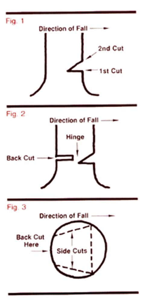 how to cut a tree diagram safely harvesting logs with the notch and hinge
