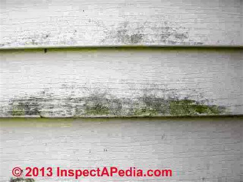 algae on house siding photos of mold on shoes mold on vinyl siding mold on