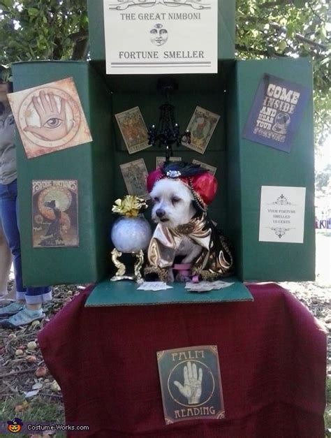 diy fortune teller dog costume