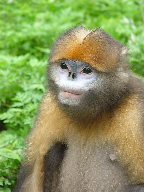monkey with saving monkeys takes a team san diego zoo global