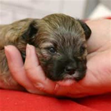 when do you wean puppies looking after homing newborn puppies