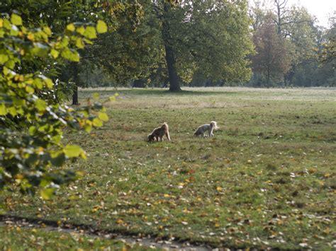 grey gardens kensington an autumn brunch in kensington chelsea london the