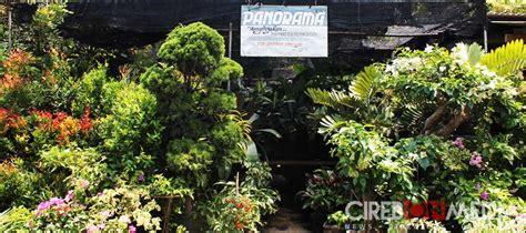 panorama sediakan berbagai tanaman hias