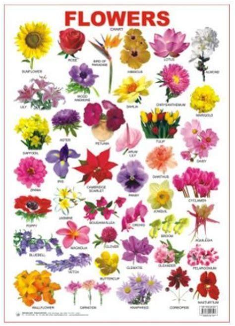flower bulb identification chartographi gardens