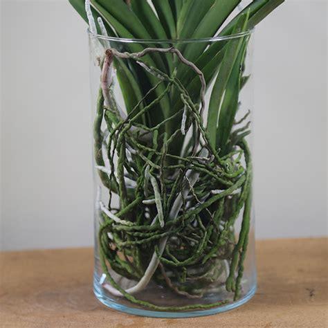 Vanda Vase by Buy Vanda Orchid In A Glass Vase Vanda Tayanee Cerise
