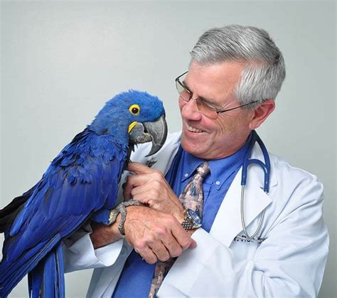 vomiting when to call the vet avian vet bird veterinarian reptile vet in winter park fl maitland orlando