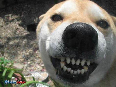 puppies smiling smiling